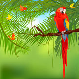 Rainforest and parrot Royalty Free Stock Images