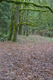 Rainforest Path 2. Pathway through the rainforest Royalty Free Stock Photos