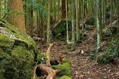 Rainforest Path. With large boulders Stock Photos