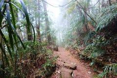 Rainforest path. Fog in the Tijuca National Park, Rio de Janeiro, Brazil Stock Photos