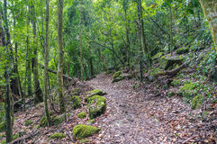 Rainforest Path. Hiking In Tropical Rain Forest Royalty Free Stock Image