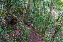 Rainforest Path. Hiking In Tropical Rain Forest Stock Images