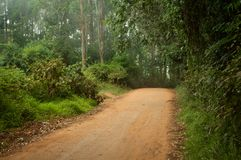 Rainforest Path. A path leading through the tropical rainforest in the Usambara mountains in Tanzania royalty free stock photos