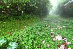 Rainforest Path - Puerto Rico Stock Photo