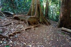 Magic rainforest path Stock Images