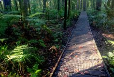 Rainforest Pathway. A wooden pathway through a tropical rainforest at Trounson Park in New Zealand Stock Images