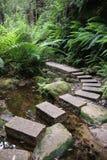Rainforest Pathway Stock Photo