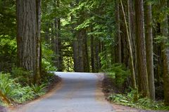 Rainforest Pavement Road Royalty Free Stock Images