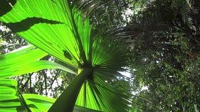 Rainforest Plant 1 stock video