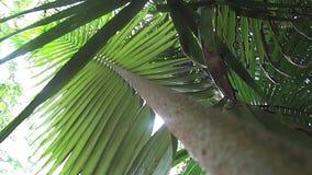 Rainforest Plant 5 stock video