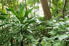 Rainforest plants Stock Image