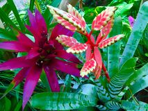 Rainforest Plants. Beautiful blooming South American rainforest plants Royalty Free Stock Photos