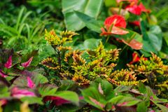 Rainforest plants Royalty Free Stock Photos