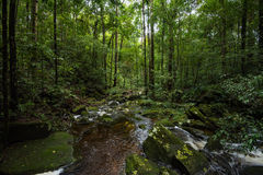 Rainforest plentiful Royalty Free Stock Images
