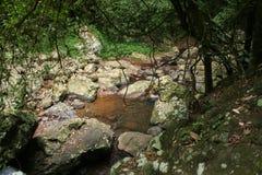 Rainforest Pond. Pond in the rainforest at Natural Bridge, Queensland Australia stock image