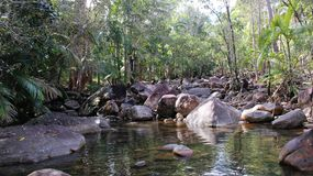 Rainforest pool. A pool in Queensland's Eungella national park reflects the rocks and vegetation Royalty Free Stock Image
