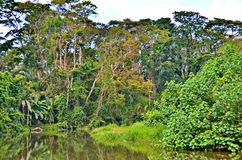 Rainforest, Puerto Limon Royalty Free Stock Photography