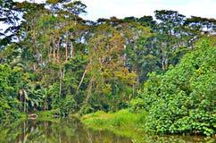 Rainforest, Puerto Limon. Costa Rica Royalty Free Stock Photography