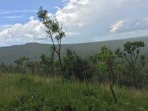 Rainforest Stock Images