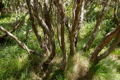 Rainforest in Reunion Royalty Free Stock Images