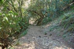 Rainforest in Reunion Stock Photos