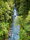 Rainforest river Royalty Free Stock Image