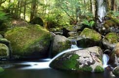Rainforest River. A river flows gently over moss-covered boulders in a temperate rainforest. Victoria, Australia stock images