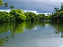 Rainforest river. Calm river trough tropical rain forest Royalty Free Stock Images