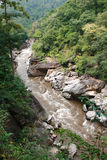 Rainforest River Stock Photos