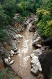 Rainforest River Stock Image