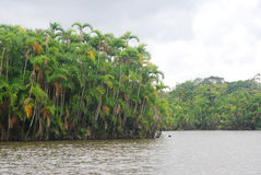 Rainforest from the river, Amazonia, Ecuador Stock Photos