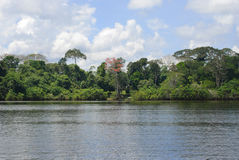 Rainforest from the river, Amazonia, Ecuador Stock Images