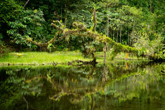 Rainforest river with foliage and tree Stock Photo