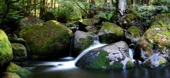 Rainforest River Panorama. ~ veiled water flows softly over mossy rocks in a lush temperate rainforest. Taggerty River, Victoria, Australia royalty free stock photos