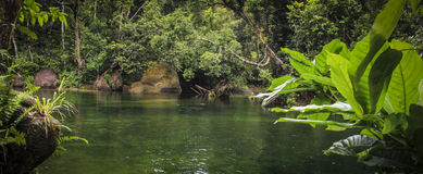 Rainforest river. Panorama of rainforest river and deep pool Stock Photo
