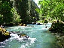 Rainforest river in summer Stock Image