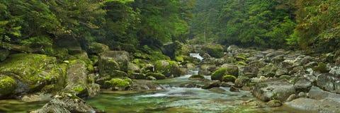 Rainforest river in Yakusugi Land on Yakushima Island, Japan Stock Image