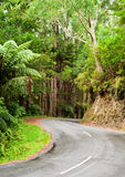 Rainforest road Royalty Free Stock Image