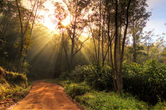 Rainforest road Royalty Free Stock Images