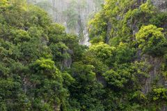 Rainforest on rocky cliff Royalty Free Stock Photo