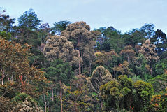 Rainforest in Sabah Borneo Stock Photography