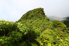 Rainforest of Saint Kitts Royalty Free Stock Images