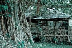 Rainforest Shack. Abandoned shack in the rainforest Stock Photos