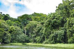 Gatun Lake, lush vegetation on shoreline, Panama stock photos