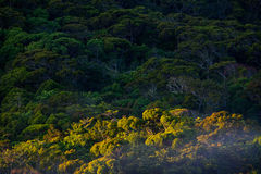 Rainforest Sinharaja, Sri Lanka Arkivfoto