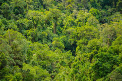 Rainforest in the Springbrook National Park, Australia Royalty Free Stock Photography