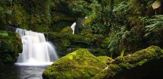 Rainforest stream. Waterfall in new zealand rainforest Stock Image