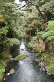 Rainforest stream Royalty Free Stock Photos