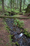Rainforest Stream Stock Photography
