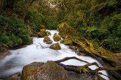 Rainforest Stream Stock Images